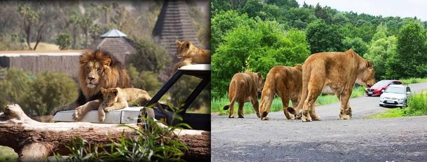 leosafari